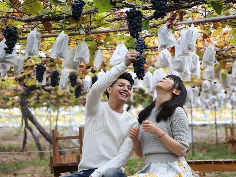 Đừng bỏ qua trải nghiệm hái trái cây theo mùa khi du lịch Nhật Bản