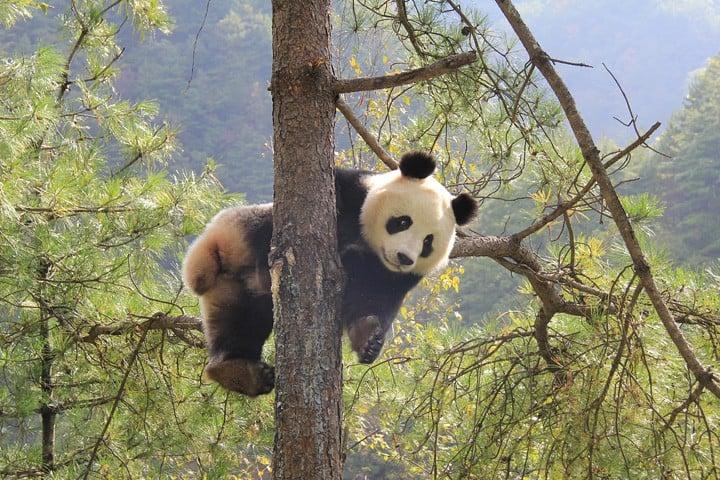 10 Địa điểm thiên nhiên hoang dã đẹp nhất Châu Á